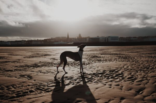 photo of a dog on New Brighton beach with houses and shops in the distance